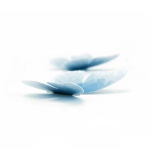 5 papillons bleu