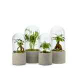 Terrarium Mix – Cloche et ciment L