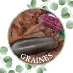 Aubergine – Thai Long Purple