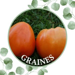 Tomate – Cœur de Bœuf Orange