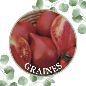 Tomate – Cœur de bœuf de Nice