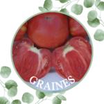 Tomate – Cœur de Bœuf Slankard