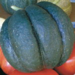 Melon – Noir des Carmes