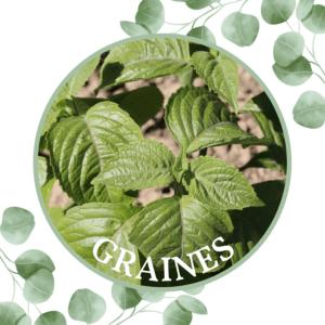 Basilic – Green Pepper