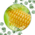 Maïs – Golden Bantam