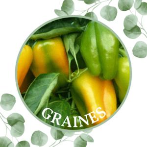 Piment doux – Poivron jaune – Sweet Jemison