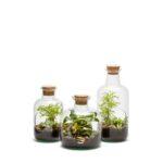 Terrarium Medicine – Taille L