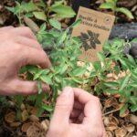 Mon jardin d'aromates – Box de graines