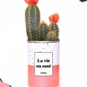La vie en rosé – Plante détox