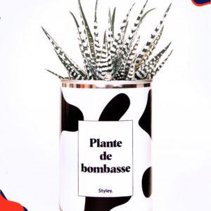 Plante de bombasse – Plante détox